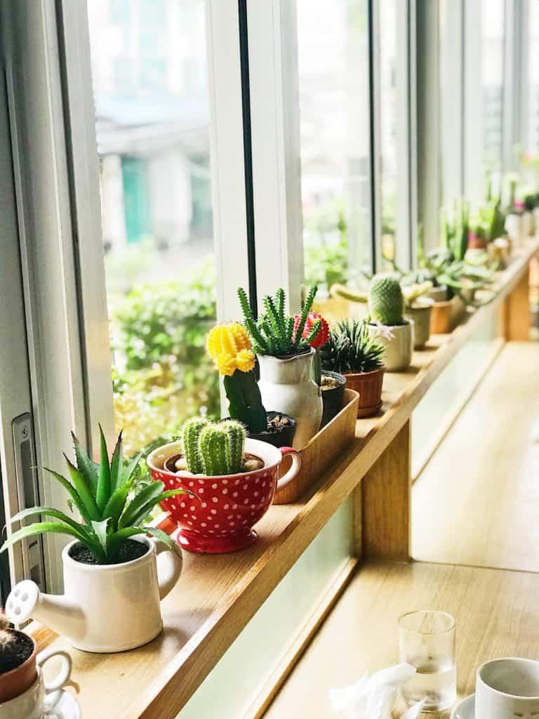 Déménager avec vos plantes
